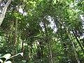 Lam Kaen, Thai Mueang District, Phang-nga, Thailand - panoramio (8).jpg