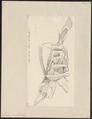 Lamna cornubica - skelet - 1700-1880 - Print - Iconographia Zoologica - Special Collections University of Amsterdam - UBA01 IZ14100077.tif