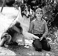 Lassie Jon Provost 1961.JPG