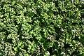 Leaf cabbage texture.jpg