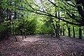 Leaf covered woodland floor on Watlington Hill - geograph.org.uk - 1288813.jpg