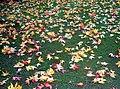 Leaf lawn (3052977469).jpg