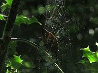 Leaf trapped in web-4294.jpg