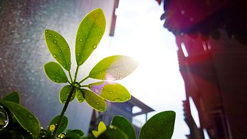 Leaves and lens flares, at NTU Crescent Hall.jpg