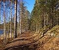 Leivonmäki National Park - trail.jpg
