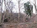 Les u Bohnic a PP Podhoří.jpg