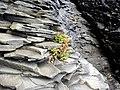 Life on the rocks - panoramio.jpg
