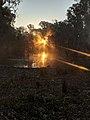 Light in the dust.jpg