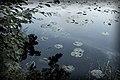 Lilypads and Leaves, Gull Lake (15211154662).jpg
