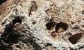 Limestone Boulder - geograph.org.uk - 868379.jpg