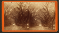 Live Oak Avenue in Bonaventure, from Robert N. Dennis collection of stereoscopic views 3.png