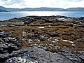 Loch Dunvegan shore - geograph.org.uk - 910436.jpg