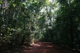 Lockerbie Scrub - Lockerbie Scrub rainforest.