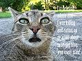 LolCat blogdelete en.jpg