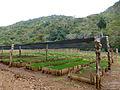 Lomas de Banao-Estación ecológica Jarico (2).jpg