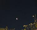Lunar Eclipse 4 April 2015 bangkok.jpg