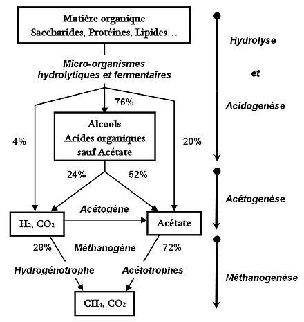 Schéma de la chaîne trophique de la méthanogenèse et ses différentes étapes