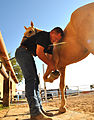 MCG prepares horses for the road DVIDS799792.jpg