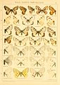 Macrolepidoptera01seitz 0027.jpg