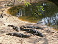 Madras-Crocodile-Bank-1.JPG