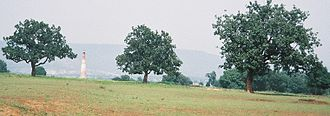 Madhuca longifolia - Image: Mahuwa trees in Chhattisgarh