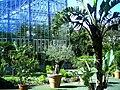 Mai - Botanischer Garten Freiburg - 2016 - panoramio (8).jpg