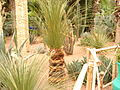 Majorelle garden in Marrakech (2844942667).jpg