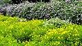 Malampuzha Gardens - panoramio (24).jpg