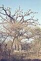 Mali1974-174 hg.jpg