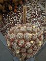 Mammillaria prolifera 3.jpg