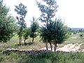 Mammu rd 3 - panoramio.jpg
