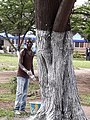 Man painting a tree.jpg