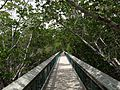 Mangrove Elevated Walkway - panoramio.jpg