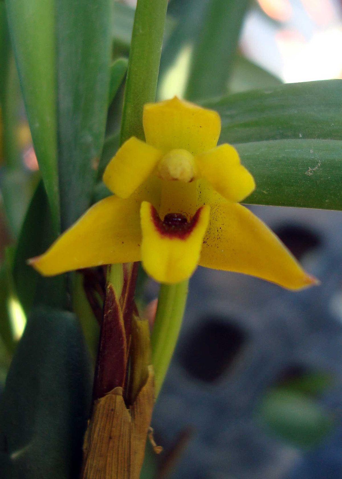 La de amarillo tiene uun culote - 1 6