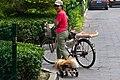 Mechanized dog (8056893247).jpg