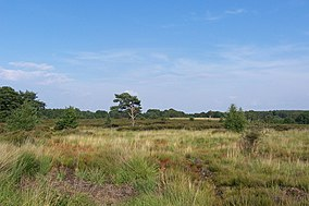 Heathland with sparsely scattered bushes