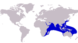 Megalaspis cordyla distribution.png