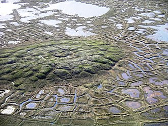 Periglaciation - Example of a periglacial landscape with both pingos and polygon wedge ice near Tuktoyaktuk, Northwest Territories, Canada