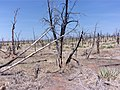 Mesa Verde Forest Fire.jpg