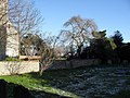 Mid December in the churchyard at St Mary, Chidham - geograph.org.uk - 1628062.jpg