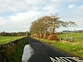 Minor Road Near Nethermill - geograph.org.uk - 287571.jpg