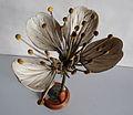 Modell der Blüte von Prunus cerasus (Sauerkirsche, Weichsel) -Brendel Nr.15-.jpg