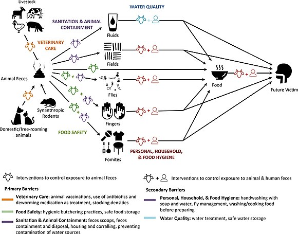 Modified F-diagram including interventions that can block human exposure to animal feces. Modified F-Diagram.jpg