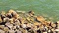 Monument afsluitdijk en omgeving 28-06-2019. (actm.) 27.jpg