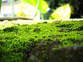 Moss (4601785046).jpg