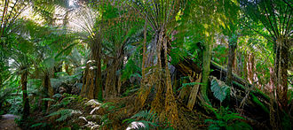 Mount Worth State Park - Tree ferns at Mount Worth State Park
