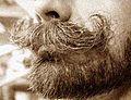 Moustacheporsche.jpg