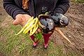 Mujeres trabajadoras de la tierra haciendo producción agroecológica - Berna Gaitán Otarán - 02.jpg