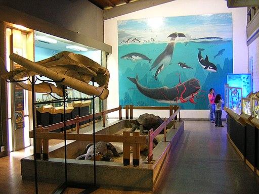 MuseoUniversitario-Interior Museums in Medellin