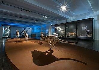 Museum Wiesbaden - Exhibition Movemant